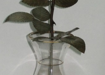 Кованая роза F9